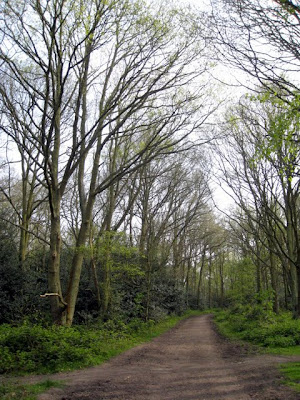 Trees and a trail in Wimbledon Common in London