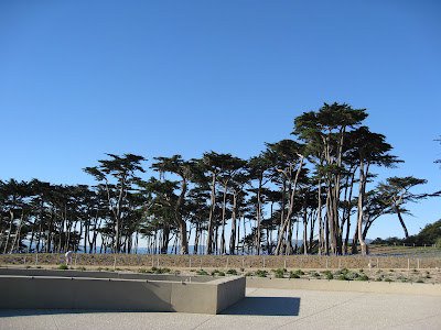 Trees at Land's End in San Francisco