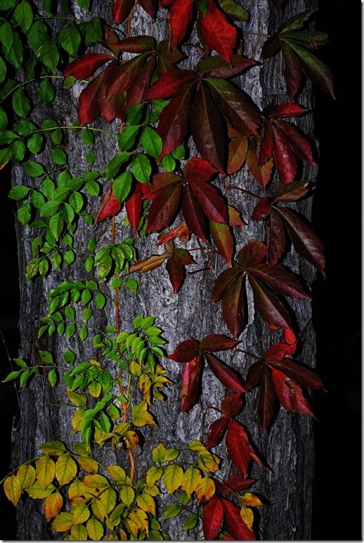 SarahinSC-fallcolors