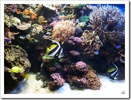 aquarium 131