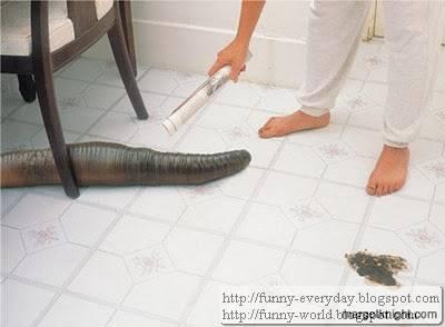 giant earthworm (1)