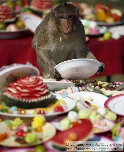 Monkey Festival (1)