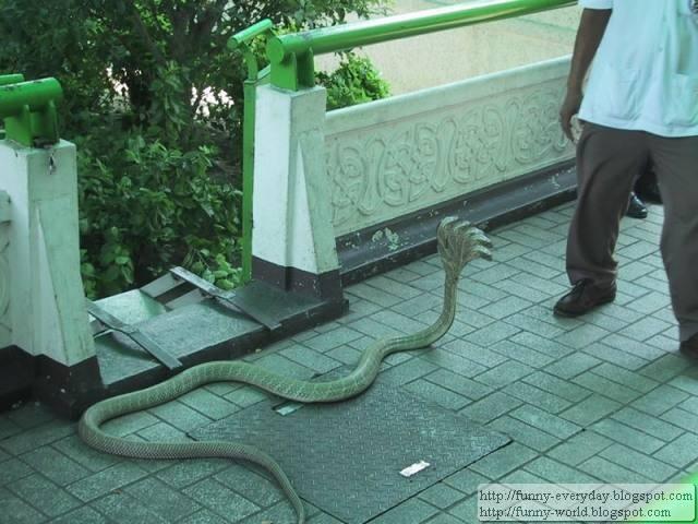 五頭蛇照片