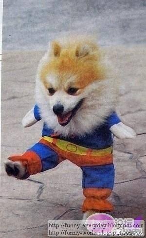 dog (11)