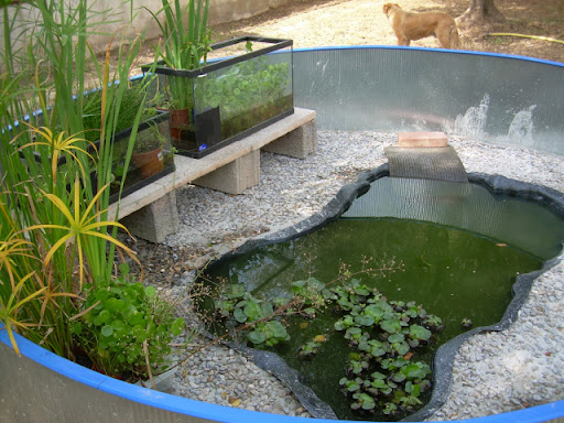 Nuevo estanque para tortugas de agua fotos for Acuario tortugas