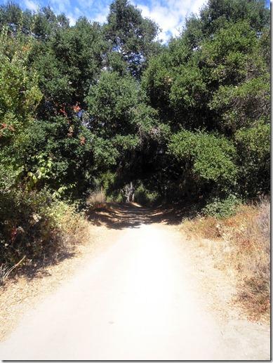 finally shade on Wood Cyn Trail