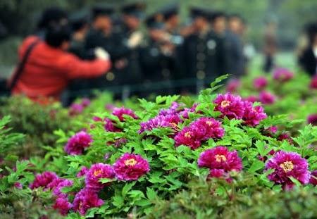 第29届中国洛阳牡丹文化节举行赏花启动仪式
