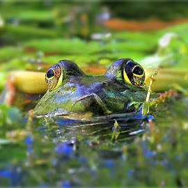 Bein' Green by Dennis Ba - Animals Amphibians ( autumn, frog, pond )