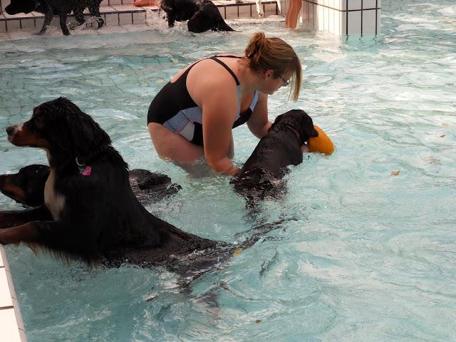 zwembad fluit openingstijden