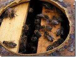 včelky  - jogurt 022