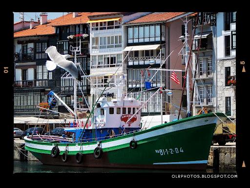 Gaviota y barco