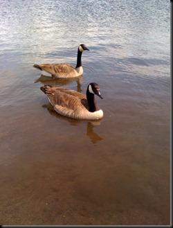 Pond(2)