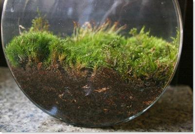 terrarium3