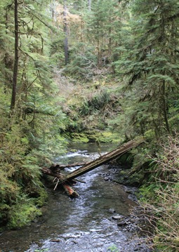 Olympic Rainforest