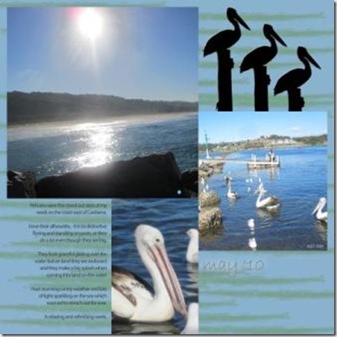 pelicans in the sun