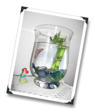 Diy beta tank joy studio design gallery best design for Betta fish bowl ideas