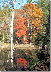 Pond reflection in Bowdoinham