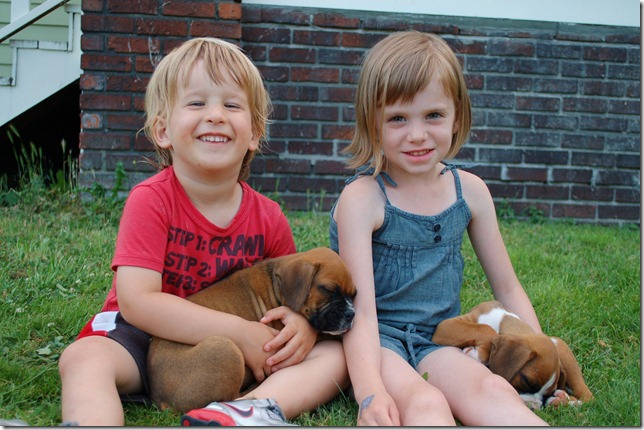 puppies 003