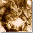 gattino che ronfa