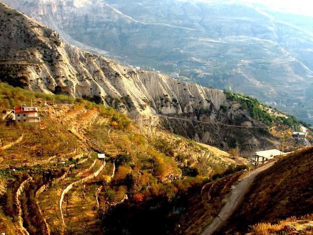 Uroczy liban