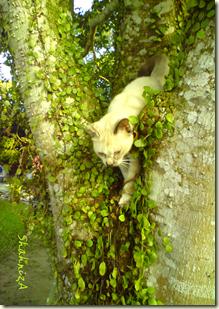 kisah seekor kucing,nyom,haiwan peliharaan