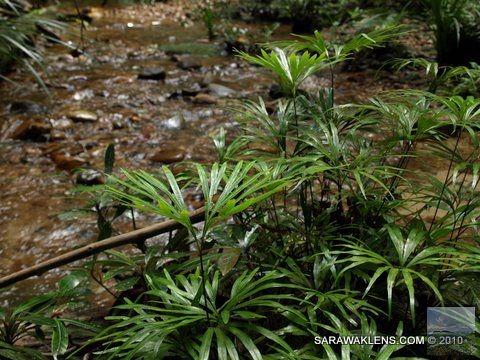 jungle_stream_ferns
