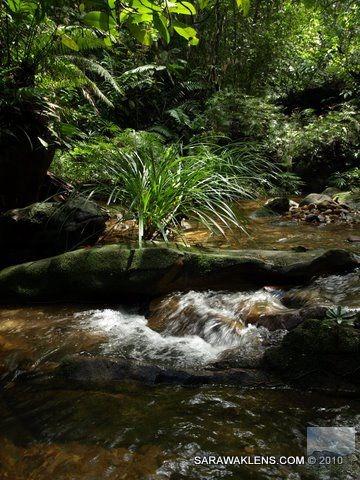 stream_in_Borneo