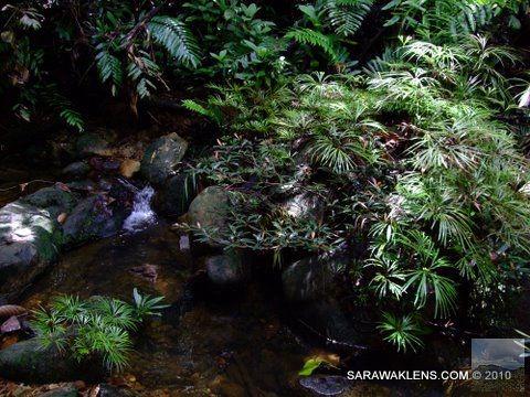 small_waterfall_ferns