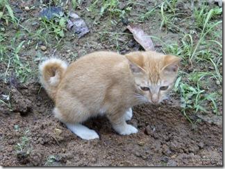 Noodle-kitten