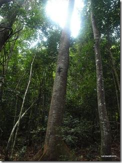 Santubong_Mountain_Kuching_Sarawak_58