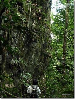 Paphiopedilum_stonei_in_natural_habitat_091120_02
