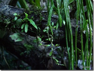 9698_orchids_on_fallen_trees