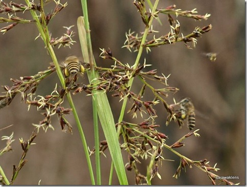 Bees_grass_flowers