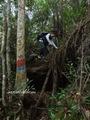 Teluk_Limau_trail_Bako_National_Park_07