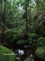 Teluk_Limau_trail_Bako_National_Park_06