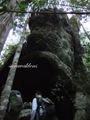 Teluk_Limau_trail_Bako_National_Park_14
