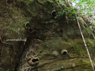 Teluk_Limau_trail_Bako_National_Park_33