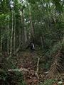 Teluk_Limau_trail_Bako_National_Park_28
