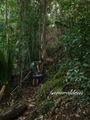 Teluk_Limau_trail_Bako_National_Park_29