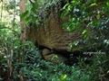Teluk_Limau_trail_Bako_National_Park_60