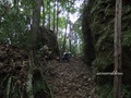 Teluk_Limau_trail_Bako_National_Park_31