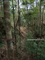 Teluk_Limau_trail_Bako_National_Park_39