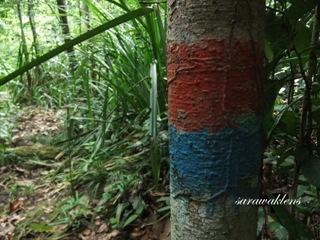 Teluk_Limau_trail_Bako_National_Park_35