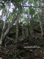 Teluk_Limau_trail_Bako_National_Park_38