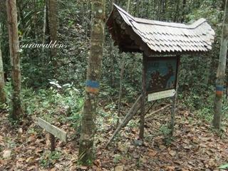 Teluk_Limau_trail_Bako_National_Park_50
