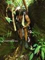 Teluk_Limau_trail_Bako_National_Park_57