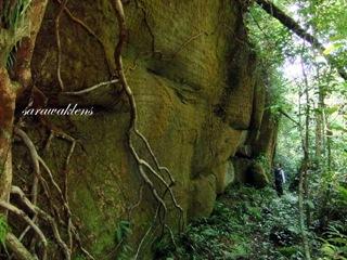 Teluk_Limau_trail_Bako_National_Park_62