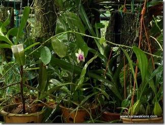 orchids_rain