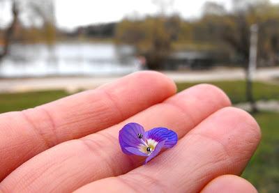 Parcul Tineretului. Floarea albastra. O palma intinsa