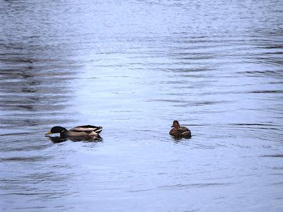 Rate pe Lacul Tineretului